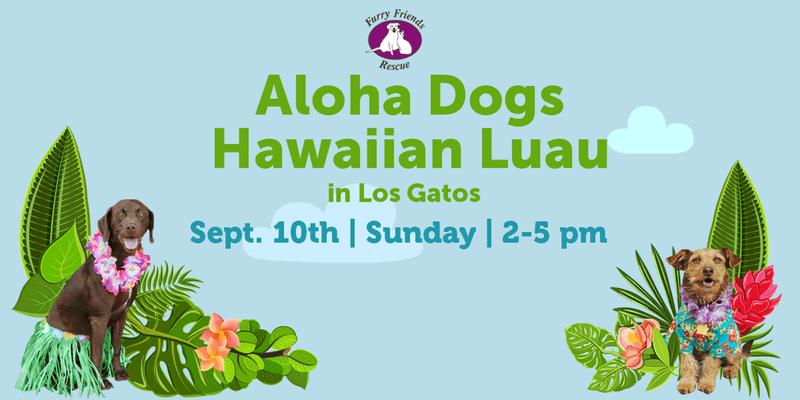 Alpha Dogs Hawaiian Luau