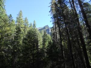 Boulder Creek Wilderness Forest Silicon Valley