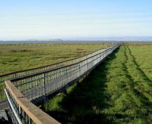Palo Alto Baylands Nature Preserve Boardwalk
