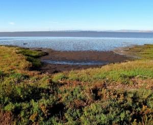 Palo Alto Baylands Nature Preserve Grass