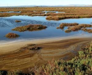 Palo Alto Baylands Nature Preserve Waters