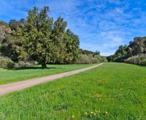 Rancho San Antonio Los Altos Trail