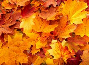 Silicon Valley Fall Events